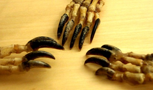 [Closeup of claws]