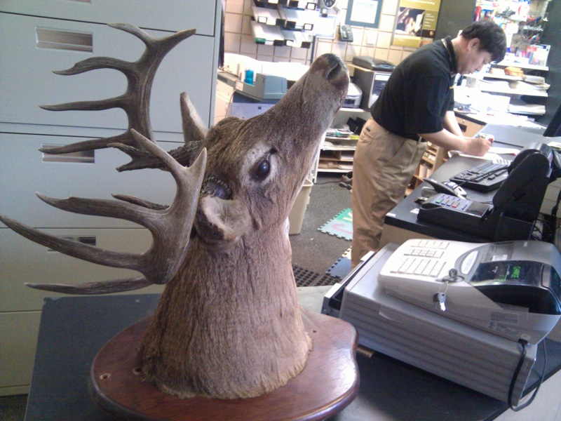 Shipping a deer head from Canada to the US by UPS.