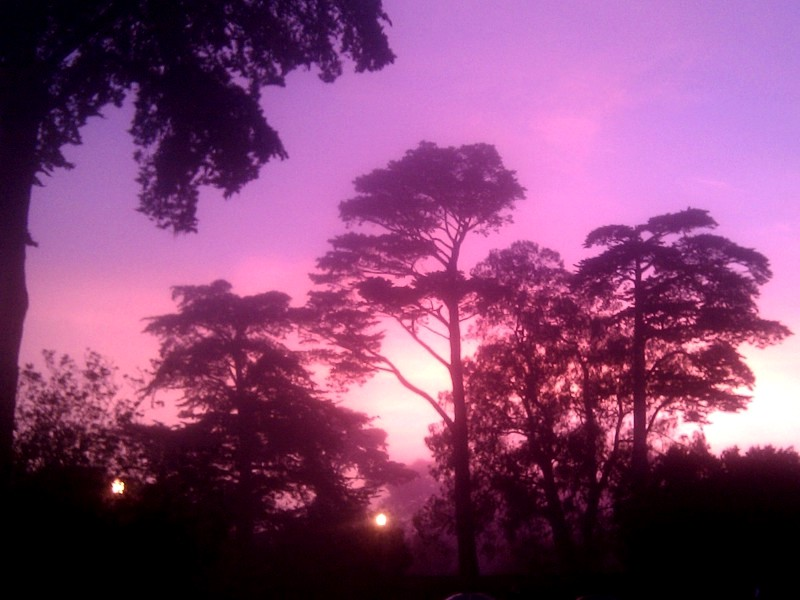 [Sunset in Golden Gate Park]