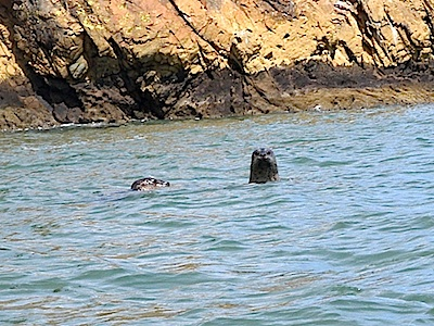 [Two seals in San Francisco Bay]